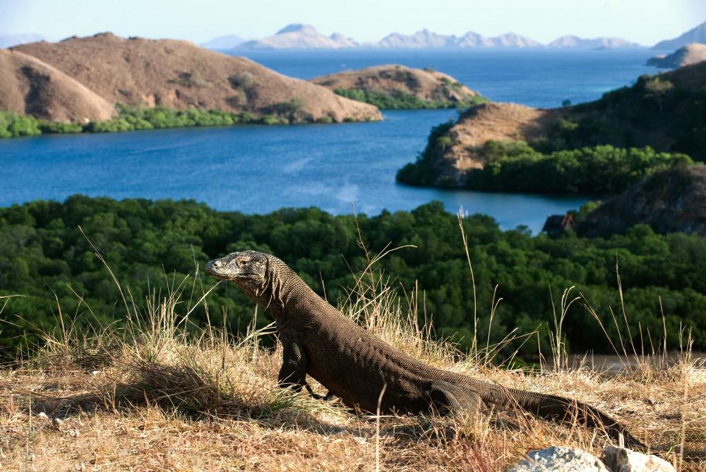 Komodo adalah salah satu hewan purba yang masih hidup hingga saat ini