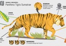 Hutan Hujan Sumatra