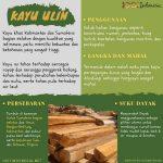 Infografis Kayu Ulin