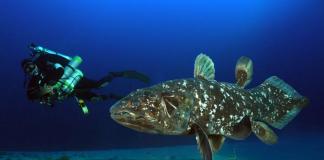 Coelacanth Bunaken, Ikan Purba yang Disangka telah Punah