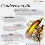 Infografis Cenderawasih