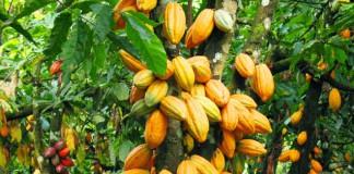 kakao Indonesia
