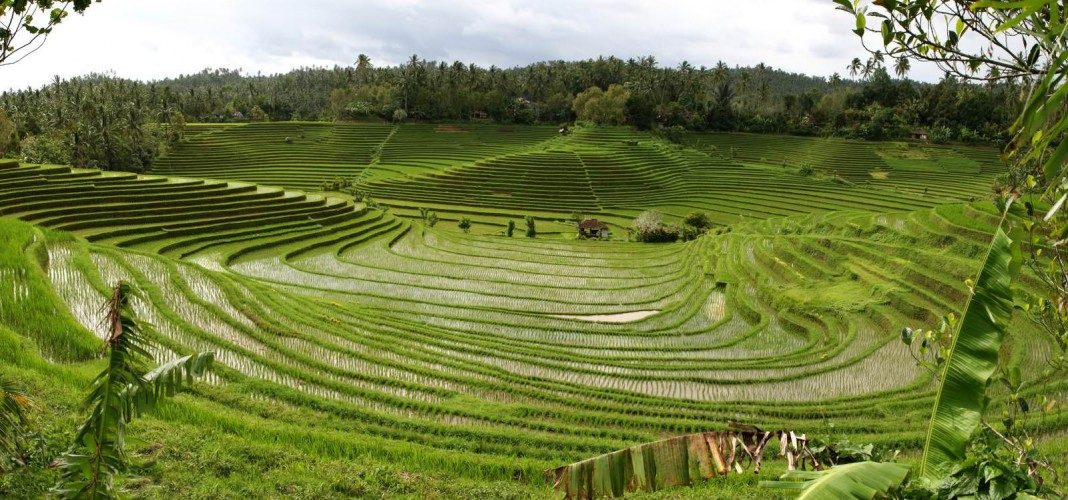 Subak, Sistem Pengelolaan Air Bersama Ala Masyarakat Bali
