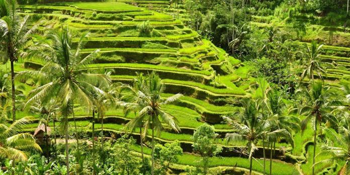 Terasering, Teknologi Pertanian pada Tanah Berlereng