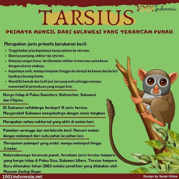 [Infografis] Tarsius Primata Mungil dari Sulawesi yang Terancam Punah