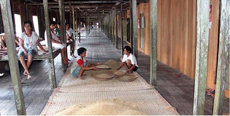 Rumah Panjang, Rumah Tradisional Suku Dayak