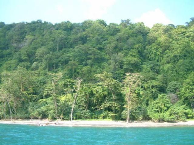 Taman Nasional Ujung Kulon (Foto: Evergreen)