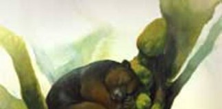 Kanguru Pohon Wondiwoi, Hewan Endemik Papua yang Terancam Punah