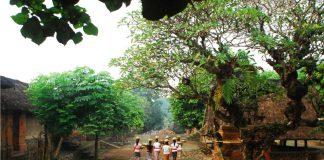 Desa Tenganan, Keunikan Desa Kuno di Pulau Bali