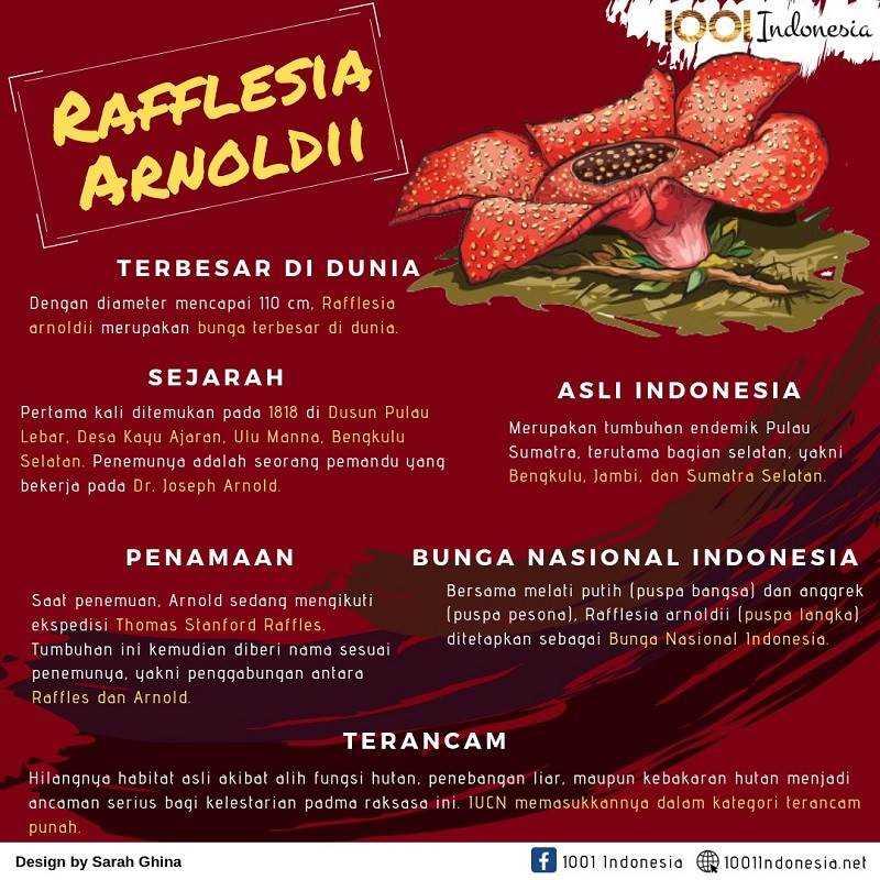 [Infografis] Rafflesia Arnoldii