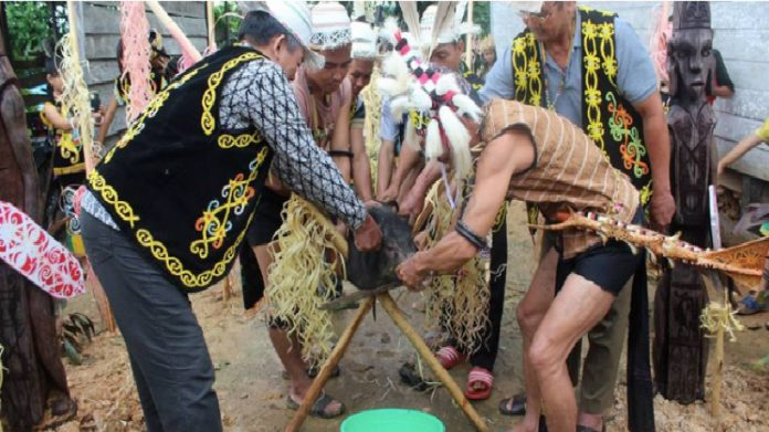 Uman Undat, Pesta Panen Masyarakat Adat Dayak