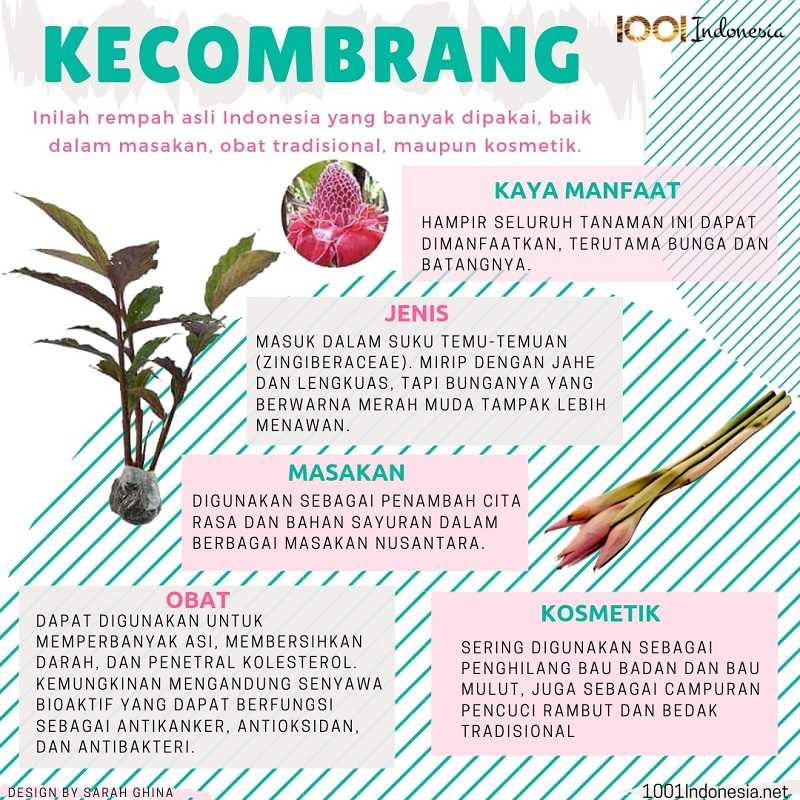 [Infografis] Kecombrang