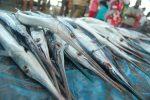 Ikan Ceracas atau Ikan Cucut