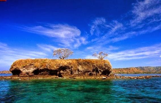 Ular laut di Pulau Ular di Desa Pai, Wera, Bima, Nusa Tenggara Barat.