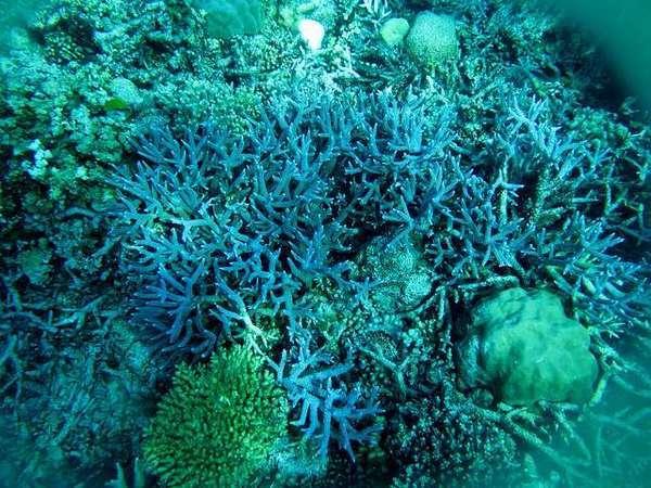 Terumbu karang aneka warna di Perairan Anambas. (Foto: Diah Nathalia Pramudya Wardani/ACI)