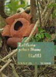 Rafflesia patma