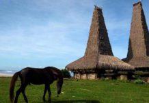 Uma Bokulu, Rumah Tradisional Sumba