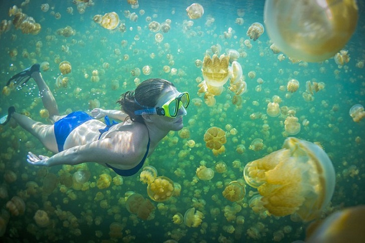 Berenang bersama ubur-ubur di Danau Kakaban, Kepulauan Derawan. (Foto: blog.hulaa.com)