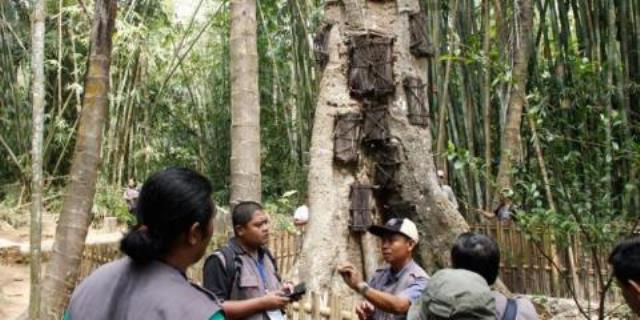 Kuburan Pohon Khas Tana Toraja